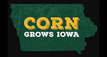 Corn: It's everything image