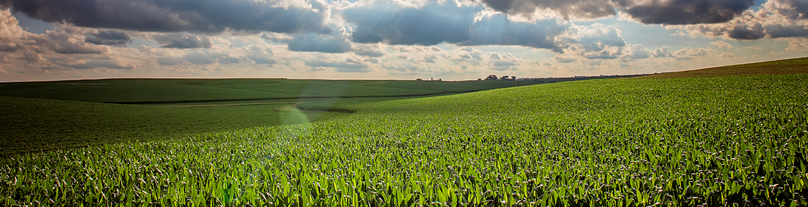 Iowa Corn Opportunities, LLC page banner
