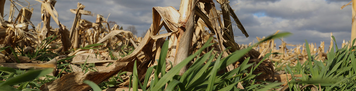 Iowa Agriculture Water Alliance page banner