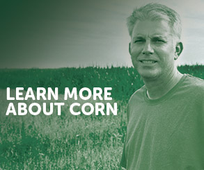 Learn More About Corn